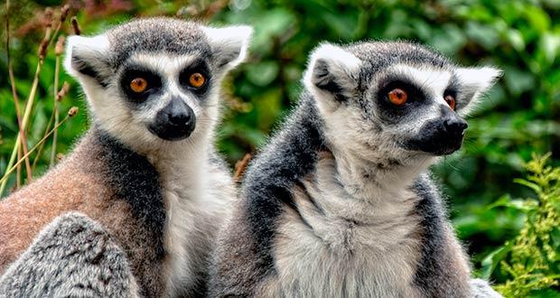 Мадагаскар или Бразилия: два крутых варианта улететь из Хельсинки за 40300₽ туда-обратно