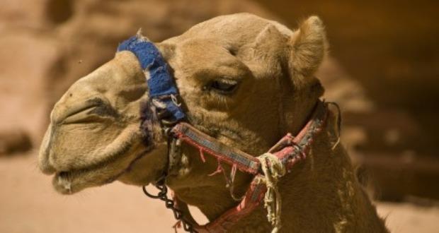 1 апреля - никому не верим и летим в Иорданию! Тур из Мск на 7 ночей 13300₽/чел.