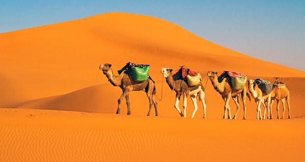 А вот и Тунис! Туры для двух столиц на неделю от 21700₽ на чел. (вылет послезавтра)